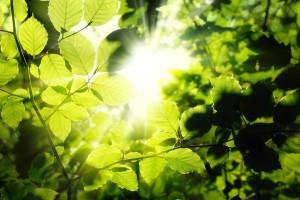 Buchenblätter umrahmen die Sonne in der Mitte des Bildes